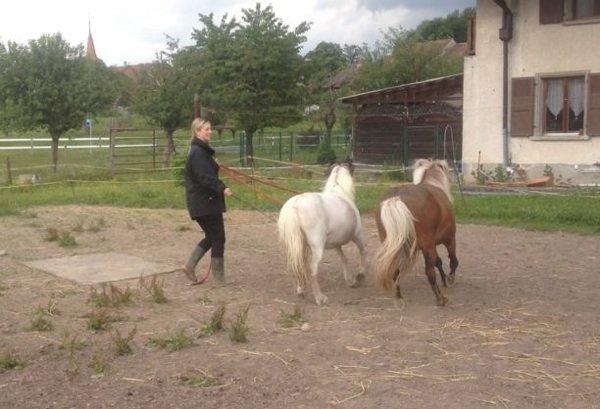 Travail des poneys!