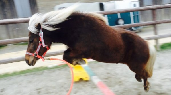 Tafta poney de saut!