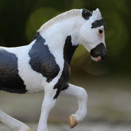 Idées de noms pour vos chevaux