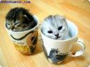 Photo de chat-chaton0