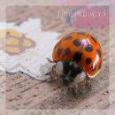 Photo de Life-is-picture-x3