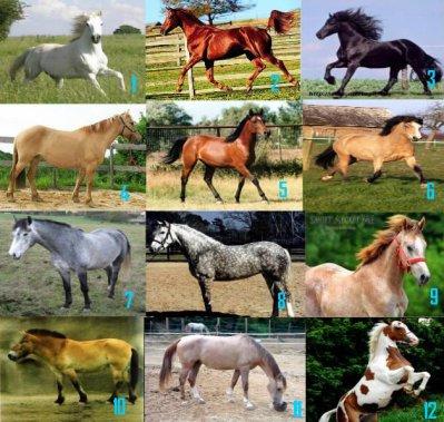 ad179995139 Les différentes robes - PassiOn pOur les chevaux