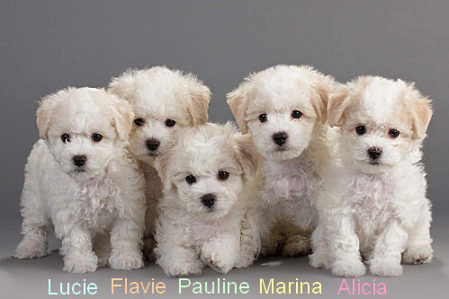Flavie, Lucie, Alicia, Marina, Pauline
