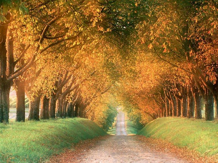 Le chemin....