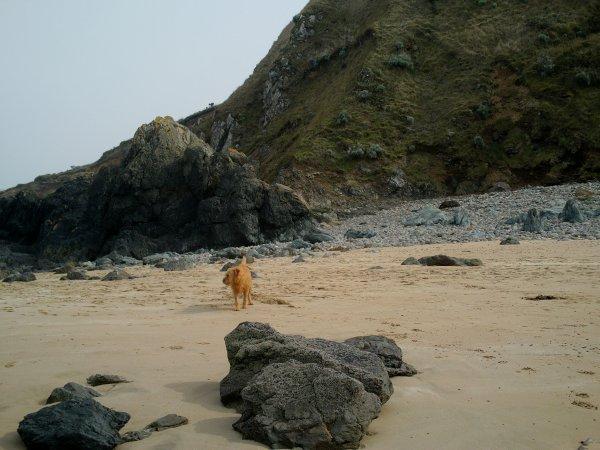 loulou s'eclate à la plage