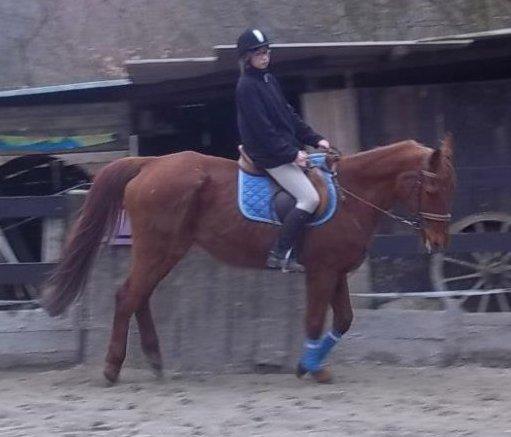 Le cheval est pour l'homme ce que les ailes sont pour un oiseau.