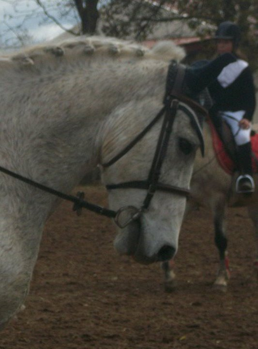 Gros poney gris. <3