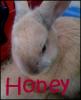 Honey-My-Rabbit