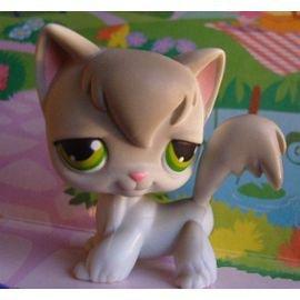 chat  gris petshop