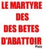"""Dossier sur """" les bêtes d'abattoir"""""""