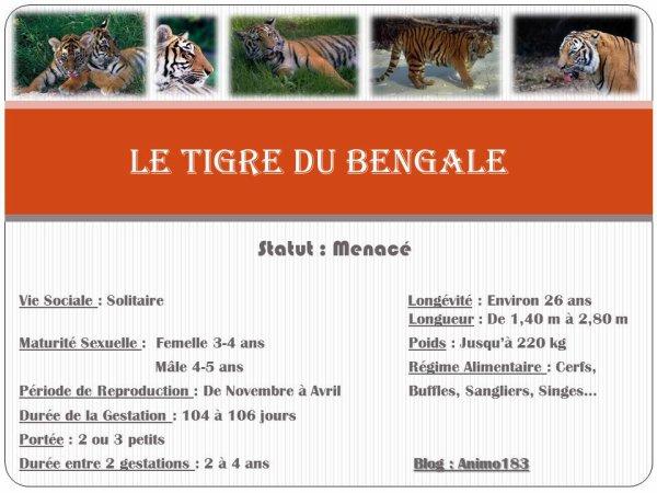 Le Roi de la jungle : Le Tigre du Bengale