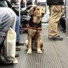 Les métiers qui ont du chien!