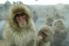 Des Singes cobayes envoyés à Fukushima!!