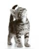 Le comportement du chat