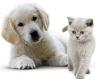 Le point des abandons d'animaux en France en 2011...