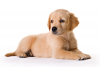Un chien meurt à cause de son propriétaire!!