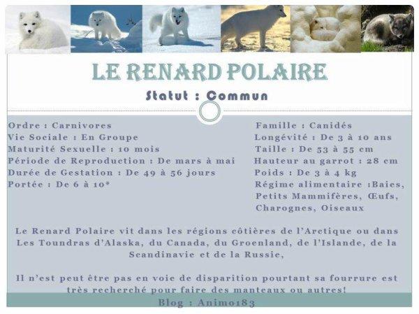 Zoom sur : Le Renard Polaire
