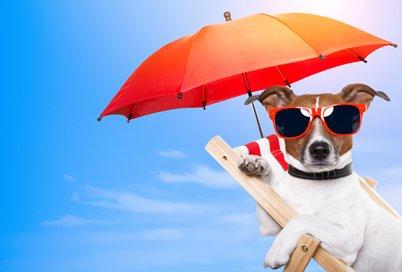 Partir en vacances AVEC ou SANS son anima! :