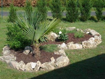 Un nouveau venu dans le massif notre maison nos travaux for Plante pour massif sans entretien