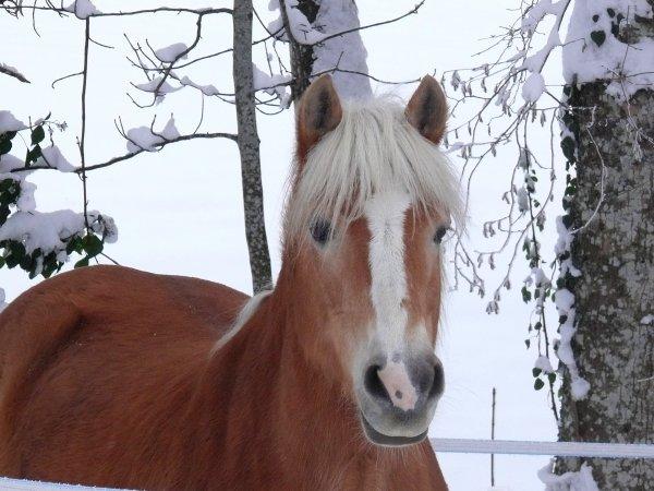 L'extérieur du cheval exerce une influence bénéfique sur l'intérieur de l'homme