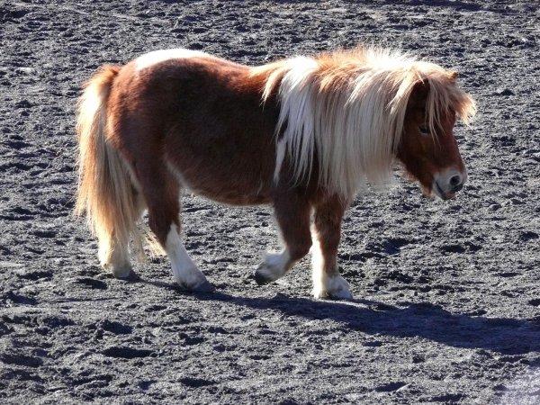 4 poneys, tous très différents, tous uniques...♥