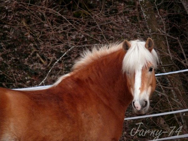 Cheval boueux, cheval heureux !