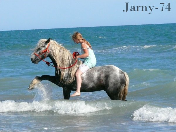 La joie la plus grande à être avec des chevaux c'est le contact avec les rares éléments que sont la grâce, l'ardeur & la passion...