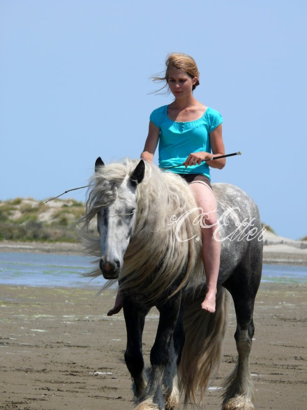 Week-end en Camargue  ♥