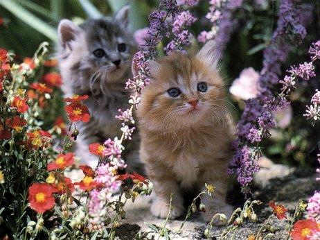 Un amour de chats!