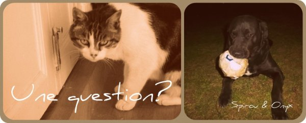 ✿ Do you have a question..? ✿