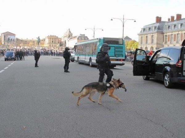 11-10-2014 - Versailles - Terrorisme - Le Raid montre les muscles devant le château de Versailles, ils s'emparent d'un bus où deux malfaiteurs retiennent des otages.