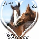 Photo de Xx-I-love-horse-55000-xX