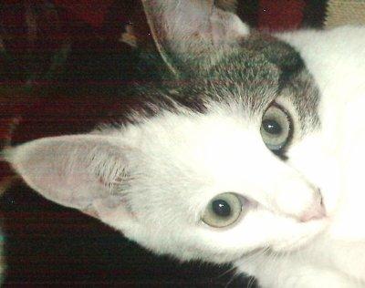 ma petite chatte Louna , elle a + de 1 an