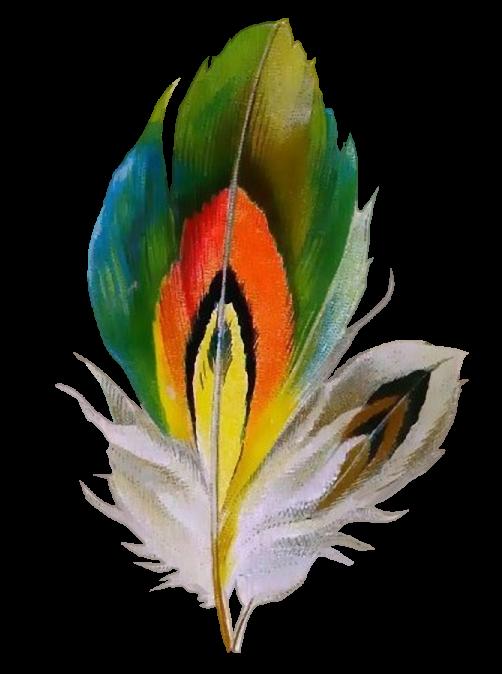 PARFUM DE PLUME .