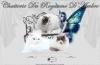 http://chatterieduroyaumedambre.fr