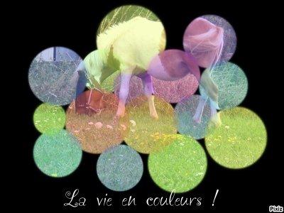 La vie en couleurs!
