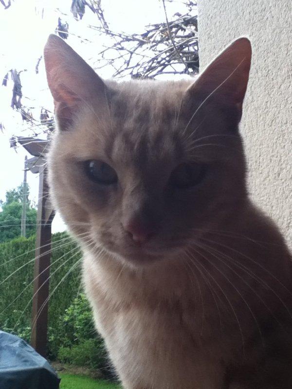 Mignon mon chat