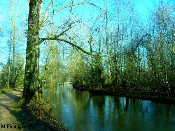 Photographie. Nature. Paysage : Donau.