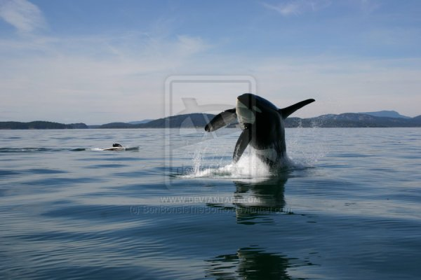 Un article qui remetra en question toutes vos connaissances sur les orques!
