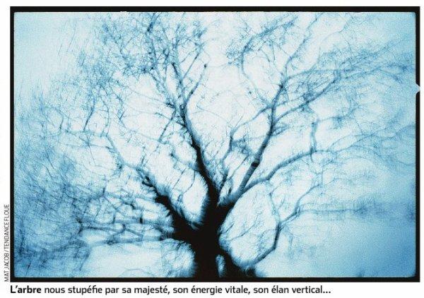 La part de l'arbre en nous