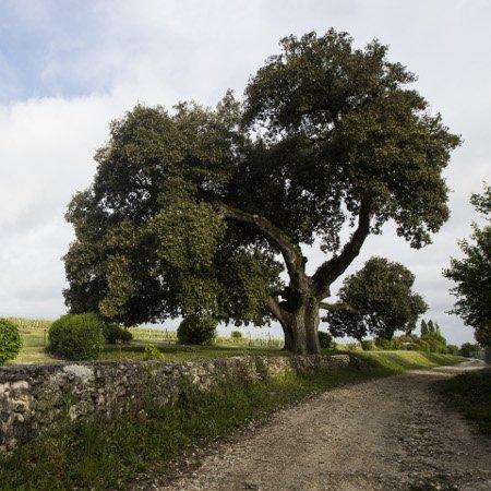 Les trois lauréats de l'arbre de l'année 2014