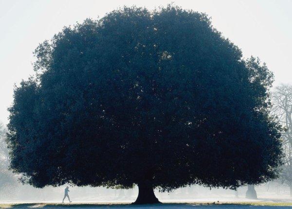 Il faut planter un arbre au profit d'un autre âge