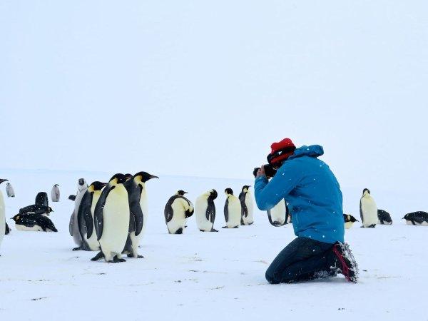 Antarctica, sur les traces de l'empereur, samedi 28 janvier 2017 à 20 h 50 sur Arte.