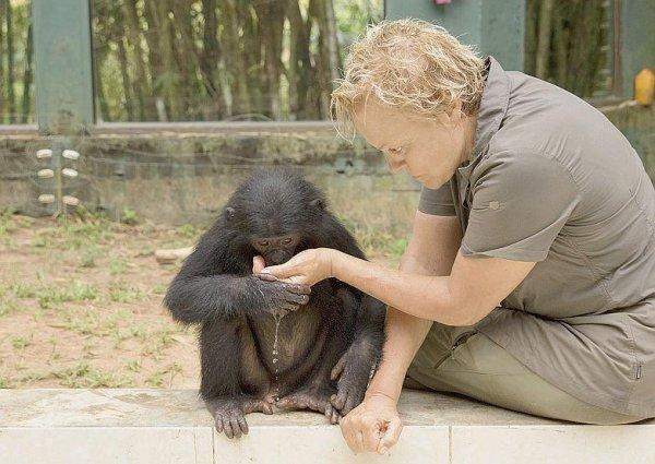 Muriel Robin à la rencontre des bonobos