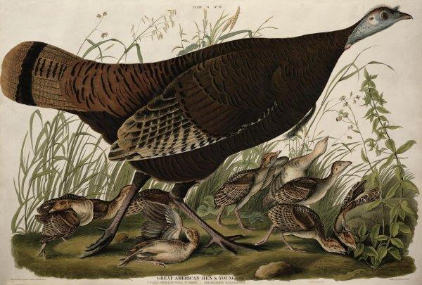 La « tribu à plumes » de Jean-Jacques Audubon