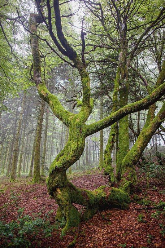L'entendement des forêts