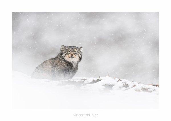 Sylvain Tesson Dans les forêts de Sibérie