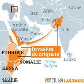 Afrique de l'est, invasion des criquets pèlerins