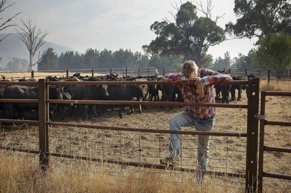 En Australie, après les flammes, le désarroi des agriculteurs