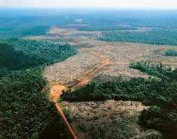 Amazonie, déforestation
